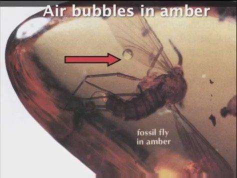 AmberFly