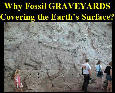 fossil_graveyards