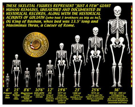 GIANT_SKELETONS_CHART