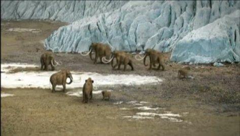 Icecaponland