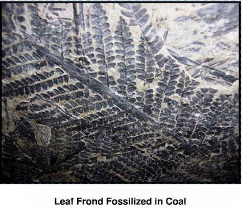 LeafFossil-COAL