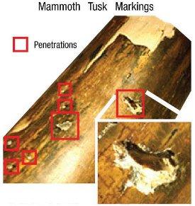mammothtuskpenetrations