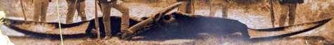 civilwarpteranodon