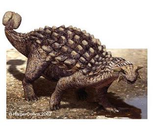ankylosaurus 1