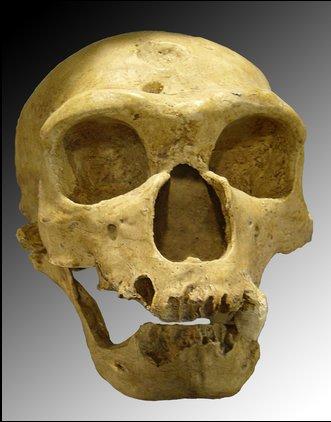 NeanderthalerSkull