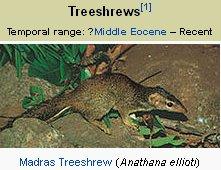 TreeShrew