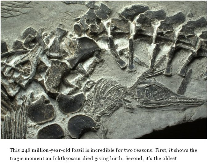 What about those 100-million-year-old dinosaur fossils?
