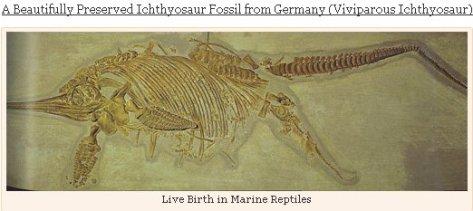 IchthyosaurBaby