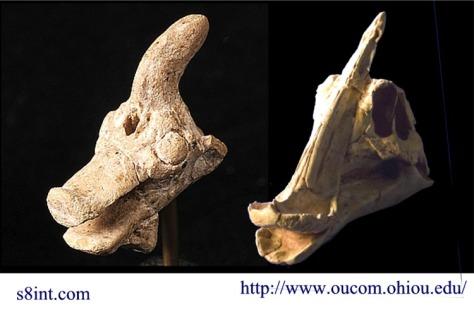 sauro-sumer-skull