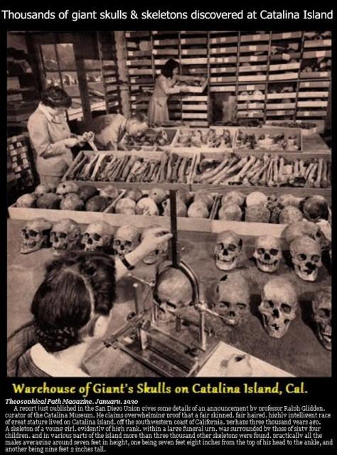 catalinaislandskulls
